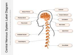 Central Nervous System Label Diagram