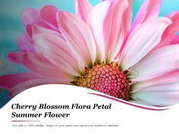 Cherry Blossom Flora Petal Summer Flower