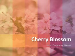 Cherry Blossom Flower Showing Circular With Full Of Flowers Powerpoint Presentation Slides