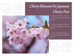 Cherry Blossom On Japanese Cherry Tree