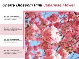 Cherry Blossom Pink Japanese Flower