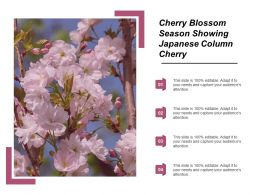Cherry Blossom Season Showing Japanese Column Cherry