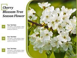 Cherry Blossom Tree Season Flower