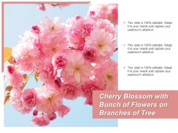 Cherry Blossom With Bunch Of Flowers On Branches Of Tree
