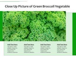 Close Up Picture Of Green Broccoli Vegetable
