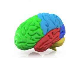 Colorful Graphic Of Human Brain Stock Photo