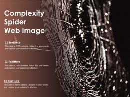 Complexity Spider Web Image