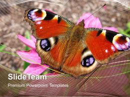 Conservation Of Nature Powerpoint Templates Colored Butterfly Beauty Image Ppt Slide Designs