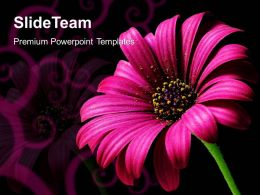 Conservation Of Nature Powerpoint Templates Daisy Flower Beauty Image Ppt Designs