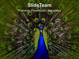 Dancing Peacock Beauty PowerPoint Templates PPT Themes And Graphics 0213