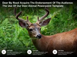 Deer By Road Acquire The Endorsement Of The Audience The Use Of Our Deer Animal Template