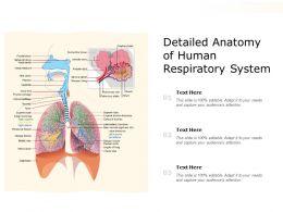 Detailed Anatomy Of Human Respiratory System