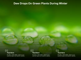 Dew Drops On Green Plants During Winter