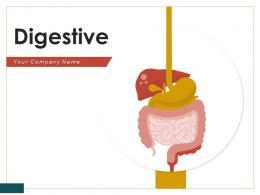 Digestive Individual System Anatomy Intestines