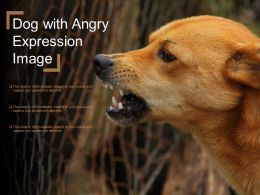 Dog With Angry Expression Image