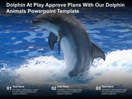 Dolphin At Play Approve Plans With Our Dolphin Animals Powerpoint Template