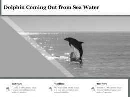 Dolphin Coming Out From Sea Water