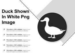 Duck Shown In White Png Image