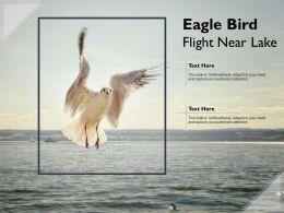 Eagle Bird Flight Near Lake