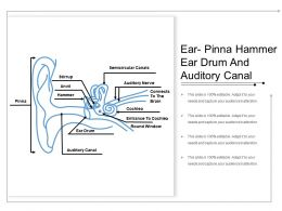 Ear Pinna Hammer Ear Drum And Auditory Canal