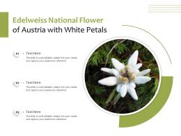 Edelweiss National Flower Of Austria With White Petals