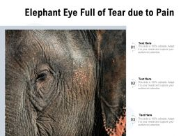 Elephant Eye Full Of Tear Due To Pain