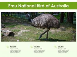 Emu National Bird Of Australia