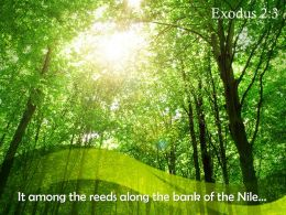 Exodus 2 3 It Among The Reeds Along PowerPoint Church Sermon