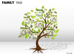 family tree 1 1