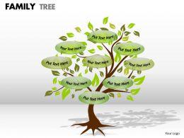 family tree 1 4