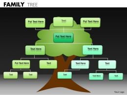 Family Tree ppt 24