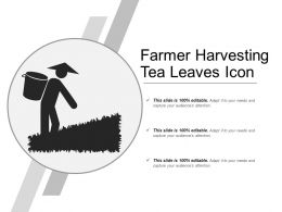 Farmer Harvesting Tea Leaves Icon
