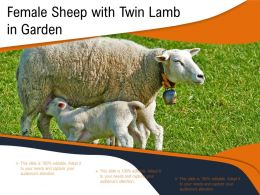 Female Sheep With Twin Lamb In Garden