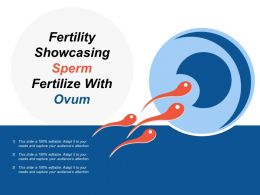 Fertility Showcasing Sperm Fertilize With Ovum