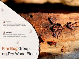 Fire Bug Group On Dry Wood Piece