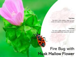 Fire Bug With Musk Mallow Flower