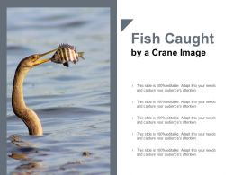 Fish Caught By A Crane Image