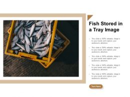 Fish Stored In A Tray Image