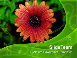 flower_with_dew_drops_nature_powerpoint_templates_ppt_themes_and_graphics_0313_Slide01