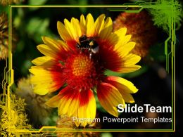 Flower With Honey Bee Nature PowerPoint Templates PPT Themes And Graphics 0213