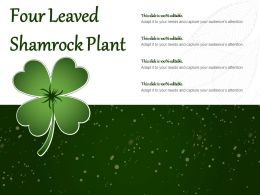 Four Leaved Shamrock Plant