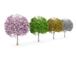 Four Seasons With Colored Trees Stock Photo
