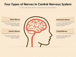 Four Types Of Nerves In Central Nervous System