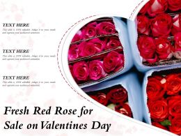Fresh Red Rose For Sale On Valentines Day
