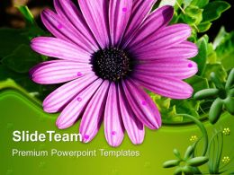 Garden Nature Powerpoint Templates Gerbera Flower Growth Ppt Themes