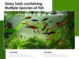Glass Tank Containing Multiple Species Of Fish