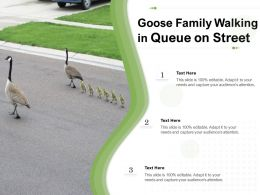 Goose Family Walking In Queue On Street