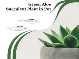 Green Aloe Succulent Plant In Pot