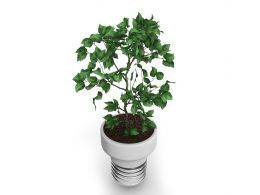 Green Basil Plant In Pot Stock Photo