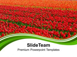 Green Fields Of Red Tulips Powerpoint Templates Ppt Backgrounds For Slides 0213